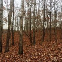 Piney Grove 120 Acres at Tuscumbia AL for 200000.0000