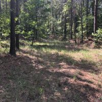 160 Acre Mature Pine Plantation With County Road Frontage at 1600 Singleton Road for 240000.0000